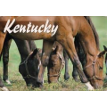 Requirements to become a pharmacy technician in Kentucky