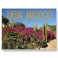 Pharmacy technician employment and salary trends, and career opportunities in New Mexico